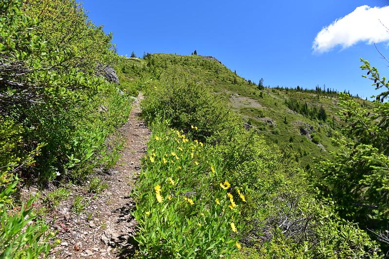 Bachelor Mountain Hike
