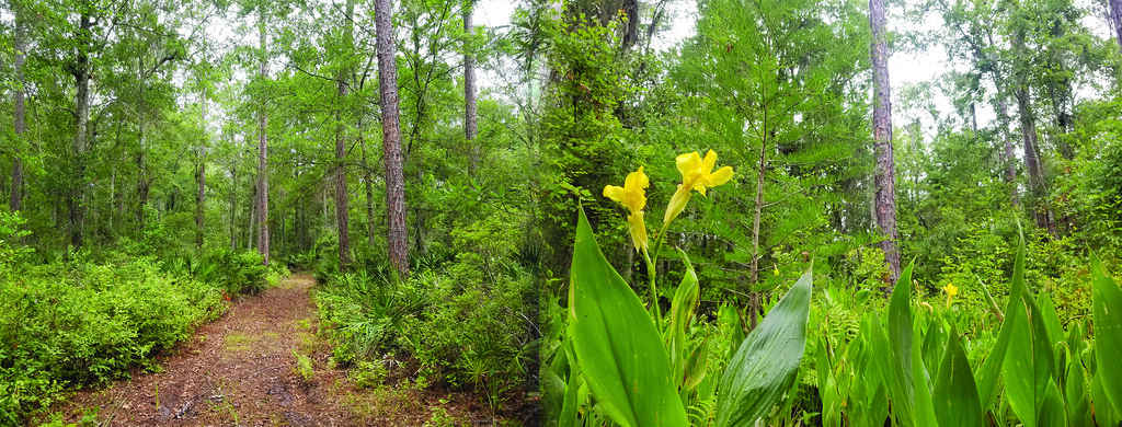 Four Creeks Preserve photos