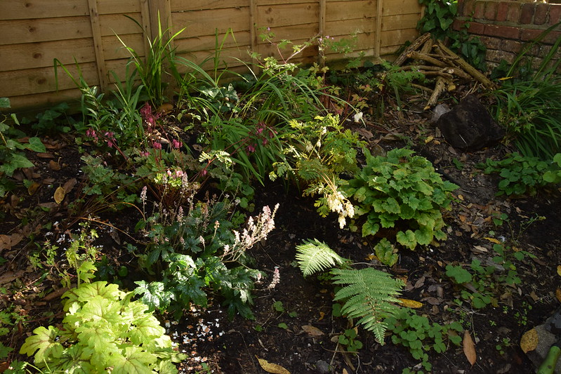 Extra dicentra formosa added to back bed - also created a dead wood pile habitat