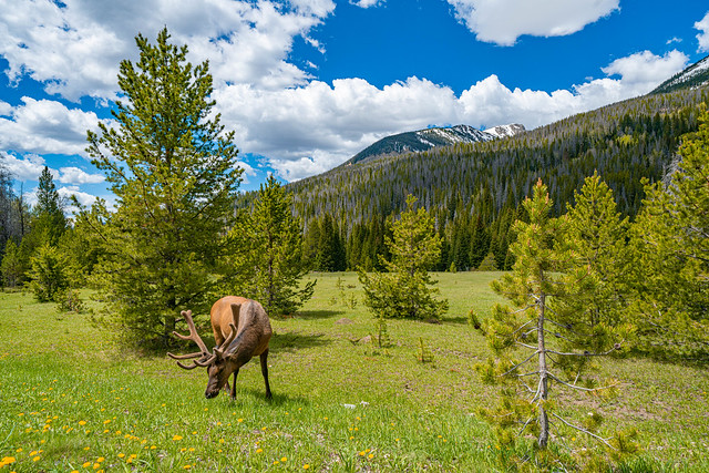 Hello Mr. Elk