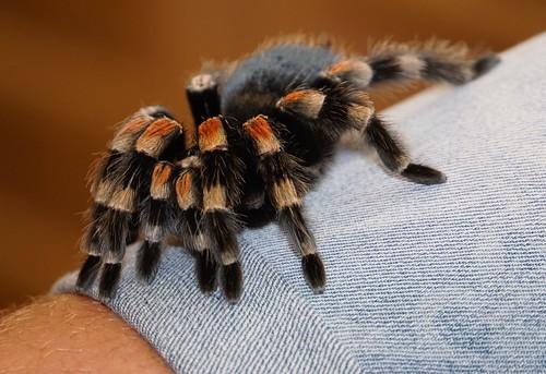 schlangen-spinnen-reptilien