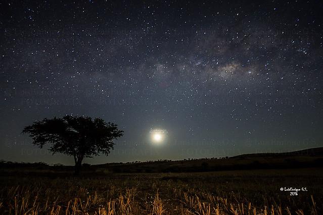 Árbol, Luna y Vía Láctea -  Mixteca Poblana - Puebla - México