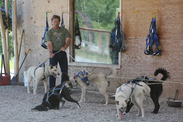 Martin Buser - dog musher