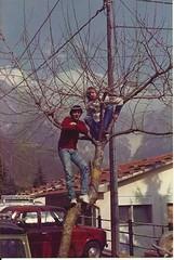 sull'albero