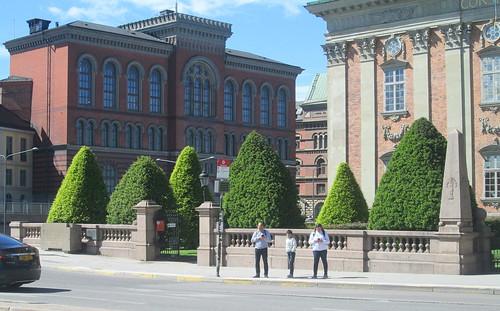 Stockholm, conifers