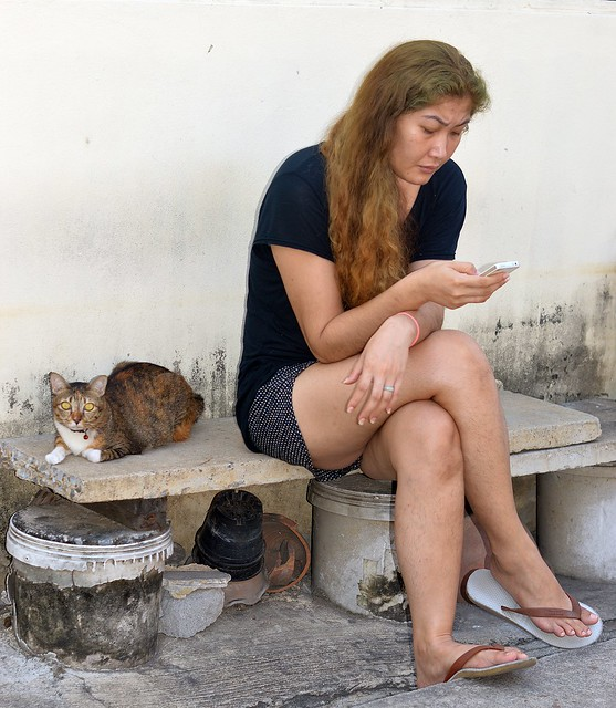 texting lady with cat