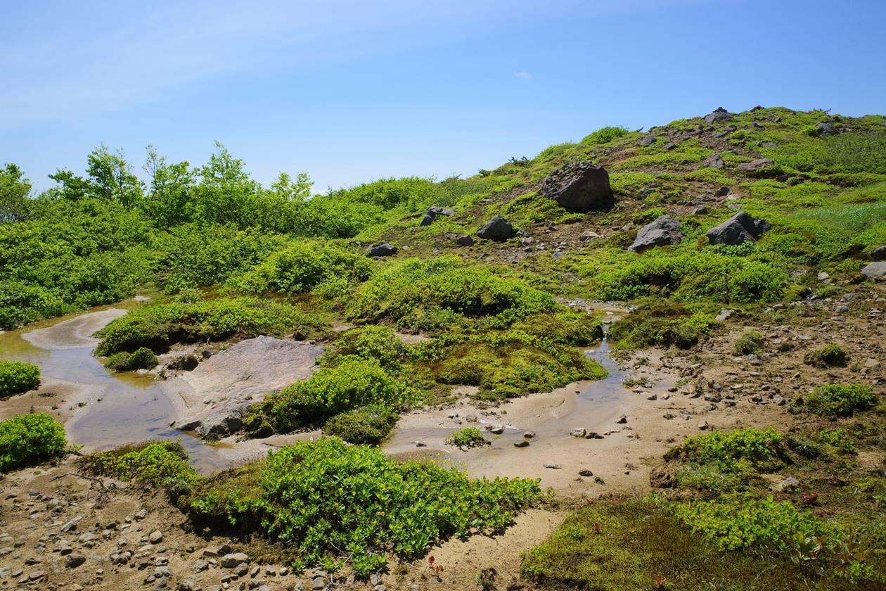 磐梯山の湿原・お花畑