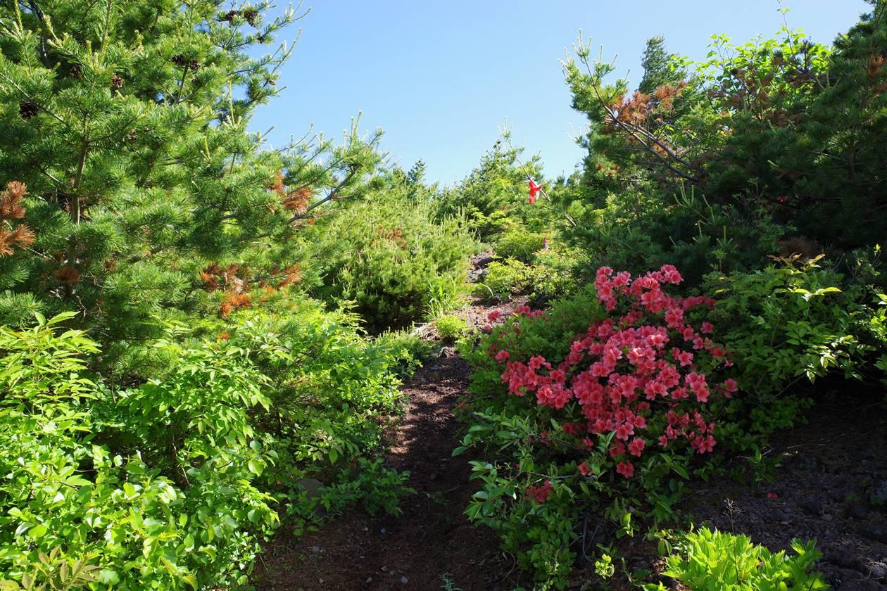赤埴山山頂へ ツツジ咲く登山道