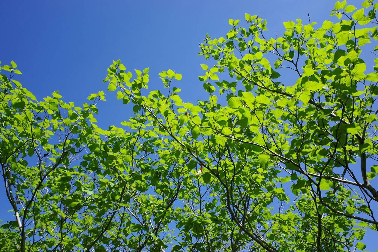 新緑の磐梯山登山