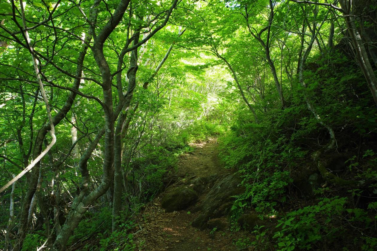 磐梯山 新緑の登山道