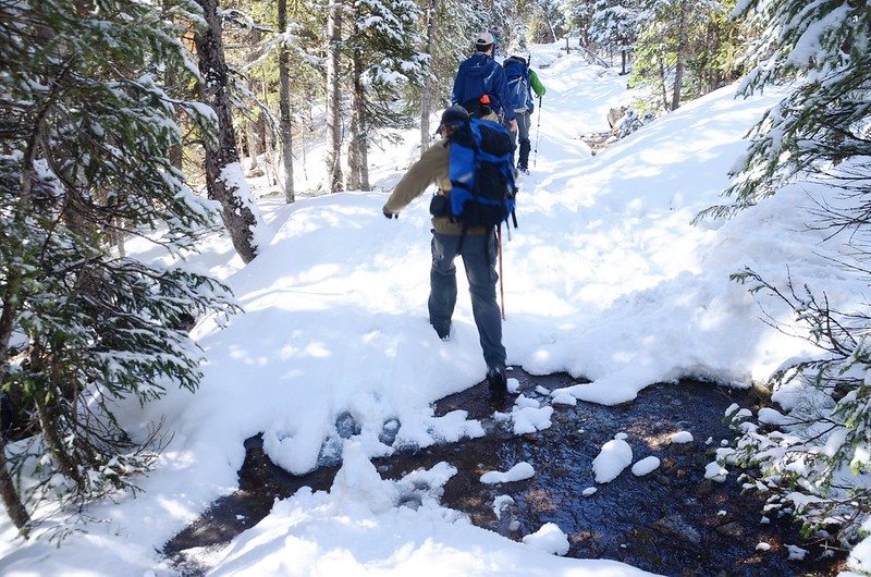 Forested snow covered trail along Bulter Gulch Trail (35)