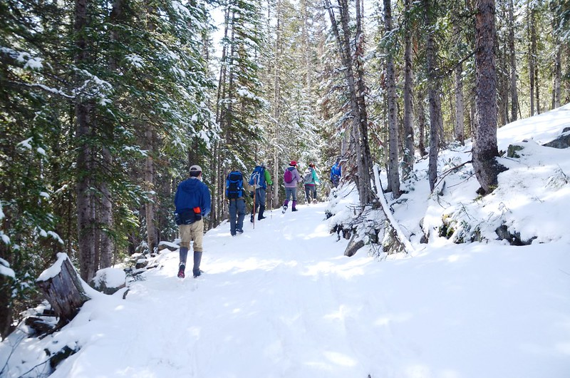 Forested snow covered trail along Bulter Gulch Trail (26)