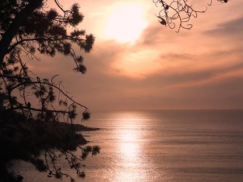 sunset coast coastline coastalsunset westcoast california ca lajolla lajollacove dusk silhouette tree pinetree falconsilhouette ocean calm serene orange peach smooth p1000 coolpixp1000 nikoncoolpixp1000 jennypansing