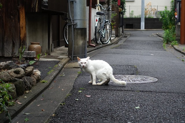 Today's Cat@2019-06-29