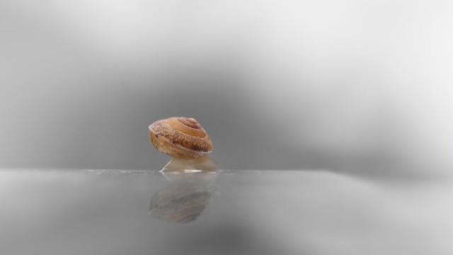 Escargot …Go ! 🐌