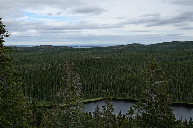 Skuleskogens view