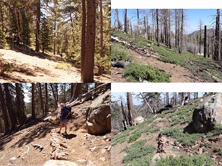 Laws Trail Pre and Post Mountain Fire Comparison | by jfr_misc