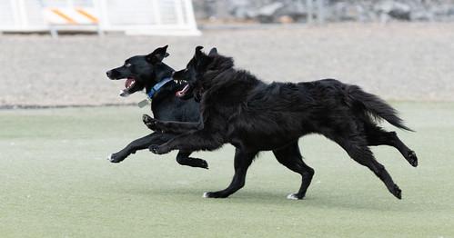 dog_park_20190629_113