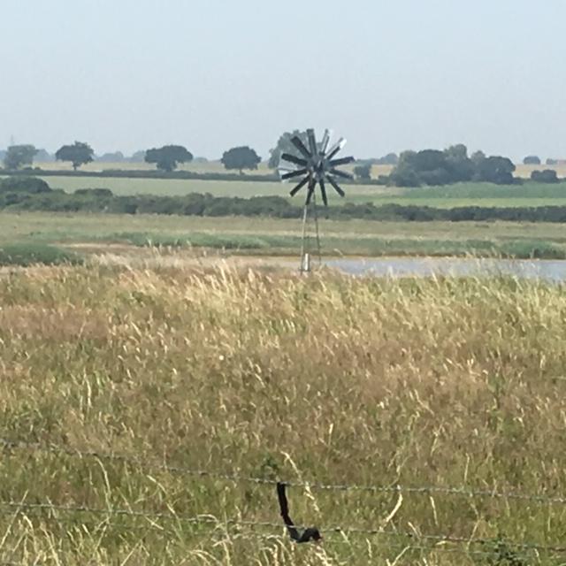 Looking inland Gunfleet Estuary Clacton to Walton on the Naze