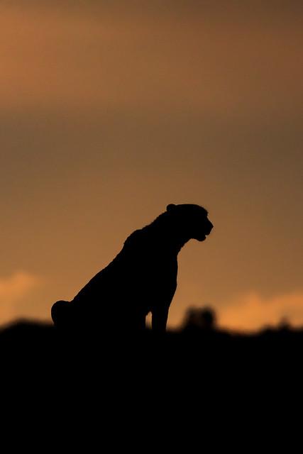Previous: Year of the Cheetah
