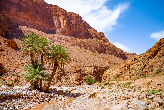 A group of palm trees in Todgha Gorge in Morocco