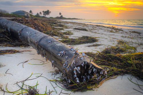 hdr bamboo beach sealife sand sunrise bathhouse palms floridakeys waves bahiahonda morning beforehurricaneirma