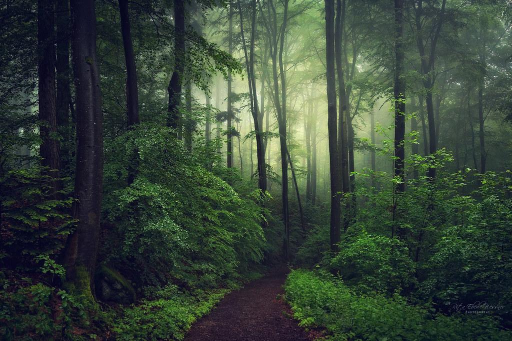 Light in the dark woods
