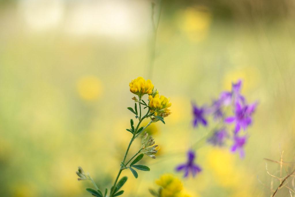 желт_цветочек