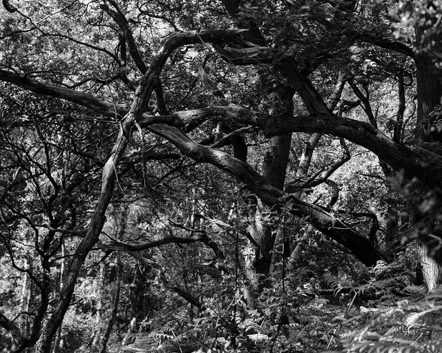 Hyons Wood, Walker Titan SF, Delta 100 in FX39