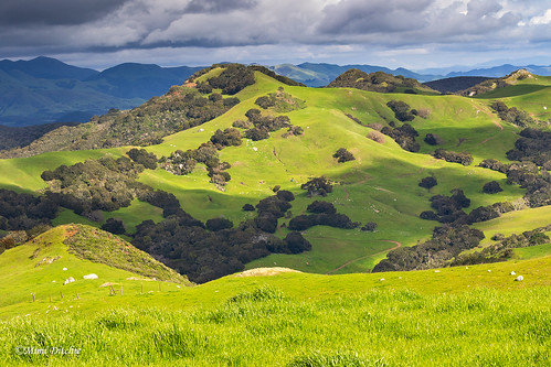 perfumocanyonroad prefrumocanyonroad greenhills landscape mountains rollinghills wildflowers spring irishhills getty gettyimages mimiditchie mimiditchiephotography sierraclubdailyrayofhopeaward sierraclub dailyrayofhope droh