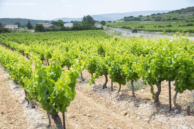 Viiniviljelmiä matkalla Le Grau-du-Roista Verdonin rotkolle