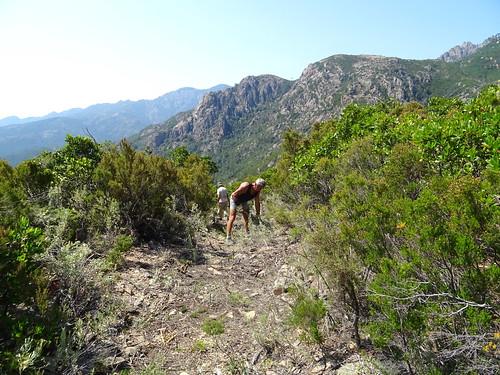 Dans la descente au retour du chemin de Paliri :  fignolage au pinatu