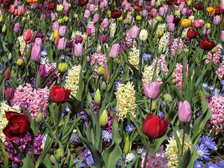 Spring in Holland, the Keukenhof