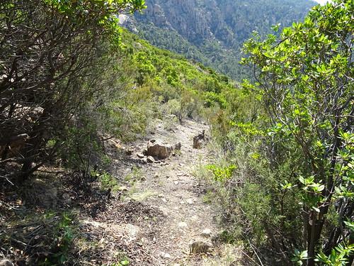 Dans la descente au retour du chemin de Paliri :  vues du chemin restauré