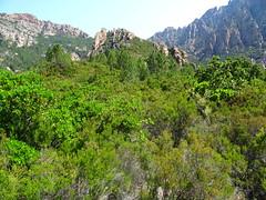 Arrivée au plateau de cistes/bruyères en vue de Punta Russa (761m)