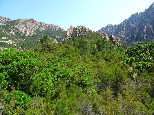 Dans la montée du chemin de Paliri :  arrivée au plateau de cistes/bruyères en vue de Punta Russa (761m)
