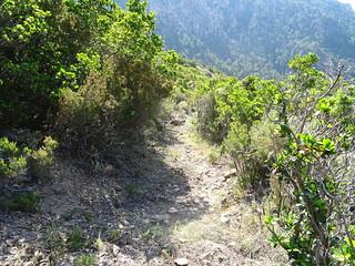 Dans la montée du chemin de Paliri : l'état du chemin démaquisé
