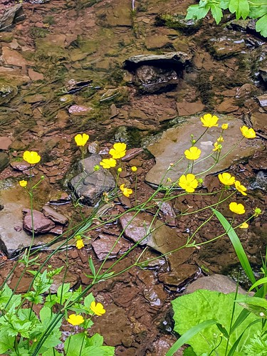 Yellow wildflowers and creek in morning light by irieknit