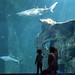 Aquarium Larochelle-5