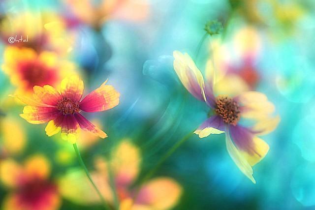 Vibrant Summer Flowers