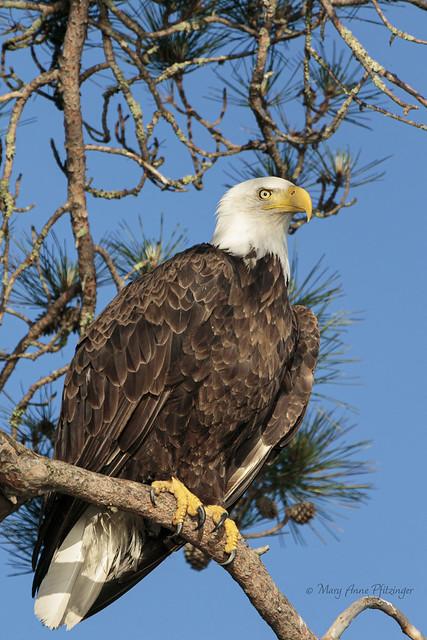 Eagle Surprise