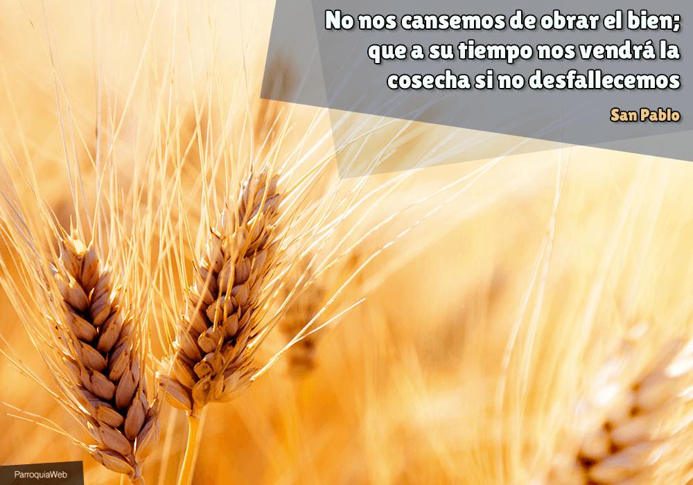 No nos cansemos de obrar el bien; que a su tiempo nos vendrá la cosecha si no desfallecemos - San Pablo