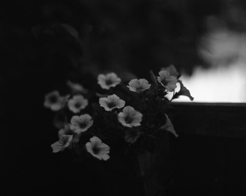 Aero flowers