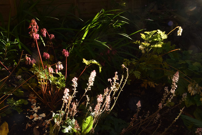 Back bed with midsummer evening's sun-dapple