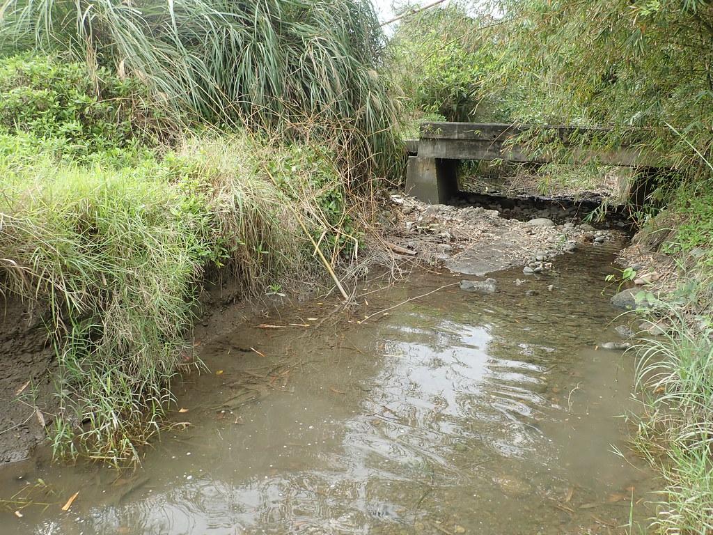 未整治的河口溝渠,兩岸各六公尺高的草澤泥壁光是大小蟹洞就高達400個以上。