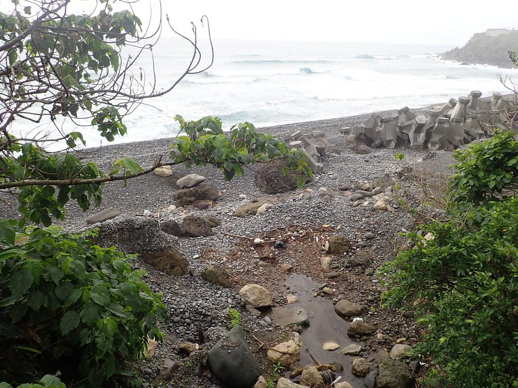 每次短暫的雨季使沒口溪溝連接了海洋,也牽起洄游生物的一生。