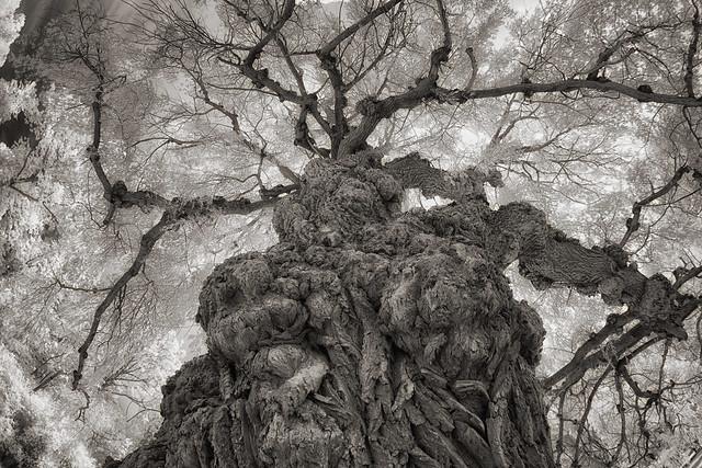 _DSC2110 Willow Tree