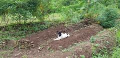 Guarding the Gran Verde Farm