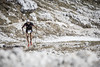 foto: La Sportiva Lavaredo Ultra Trail