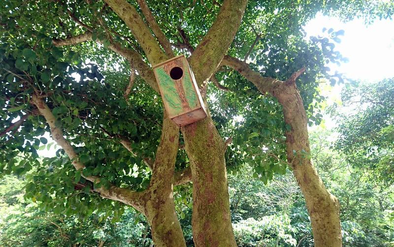 人工巢箱建置可監測飛鼠的生態變化,也可進行環境教育。攝影:李育琴